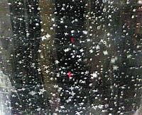 雪のアップ♪