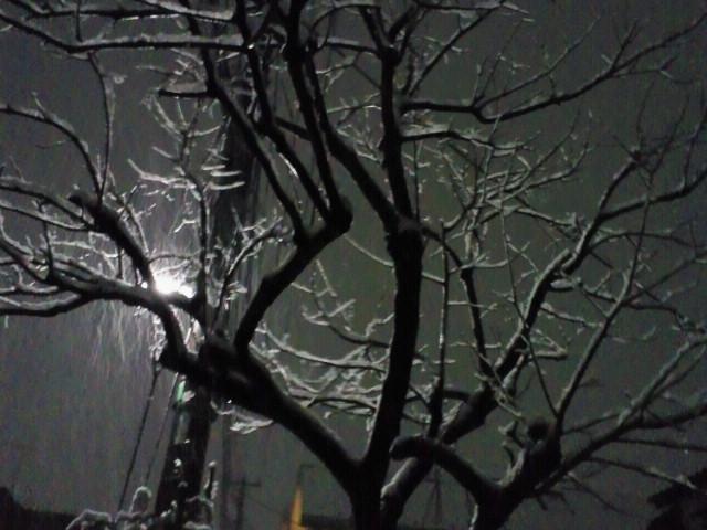 今年初めての積雪〜♪
