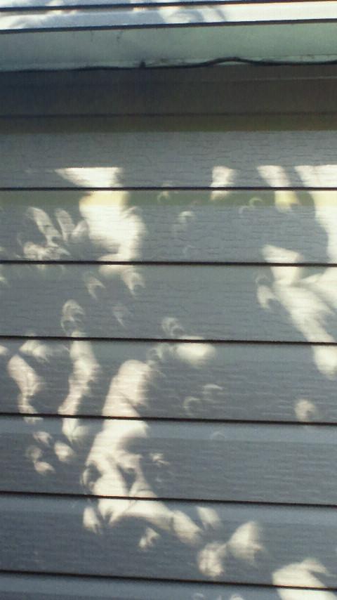 金環日蝕の木漏れ日