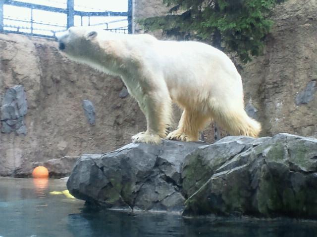 旭山動物園♪